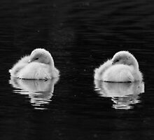 Ugly Ducklings by jonathan1984