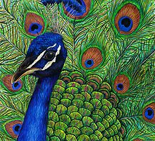 Peacock by LFurtwaengler