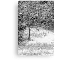 Peering Out - Deer BW Canvas Print