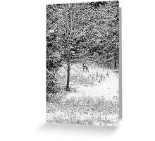 Peering Out - Deer BW Greeting Card
