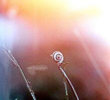 little snail by katie-k