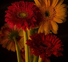 Daisy Reflection by GLibby