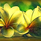 Painted Frangipanis - Still Life by Evita