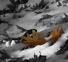 Leaves in Snow by Robert Ball