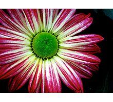 Electric Daisy Photographic Print