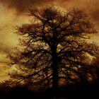 Evening Tree Hugs by PineSinger