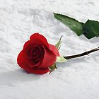 Rose in the Snow by Linda  Makiej