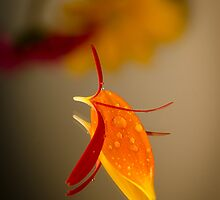 Petal Reflection II by GLibby