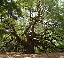 Angel Oak, John's Island S Carolina by barnsis