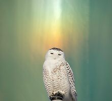 Snowy Owl And Aurora Borealis by Thomas Young
