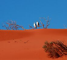 Sea Eagles on a red dirt Perch by loza1976