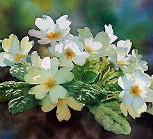 Backlit Primroses by Ann Mortimer