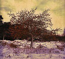 Winter Berries by Nigel Bangert