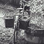 Garden Bike by Mohini Patel Glanz