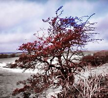 The red tree in our lane by sarnia2
