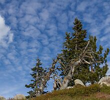 High in the Sierras by Richard Thelen