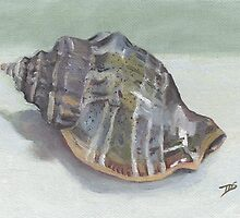 CONCH SHELL by Tracy Sheffield