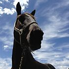 black beauty by gaylene goodsell