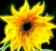 Sun Flower by PhilipRJones
