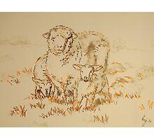 Sheep and Lamb drawing Photographic Print