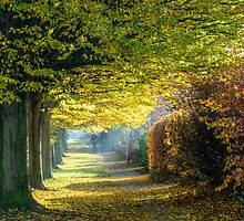 An Autumn's Walk by PhilipRJones