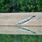 Alligator Reflection by Cynthia48