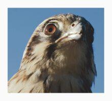 Brown Falcon by naturek