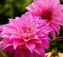 Bright pink  by prettypics75