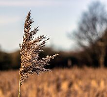 Long grass in the meadow by Paul Madden