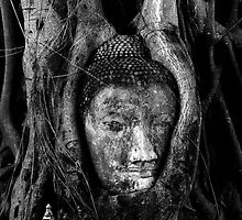 Buddha Head in Tree Roots by SSIMS