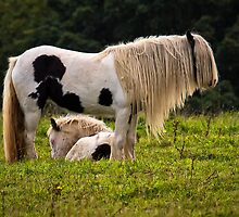 Mother and foal by Violaman