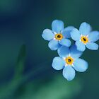 Forget me not by Norbert Fritz