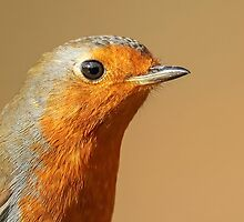 Robin Up Close by Mark Hughes