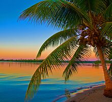 Guatemala. Atlantic Coast. Palm Tree. Sunset. by vadim19