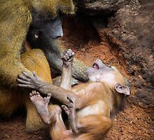 Baboons Playing around!  by Ben Frewin