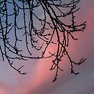 Branches in the Setting Sun by heatherfriedman