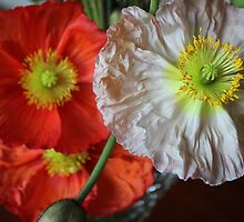 Poppies. by JDWPhotos