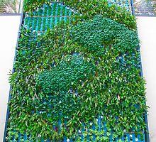 Vertical Gardening - Vertical Garden Green Wall Biowall ecowall Living Wall by Ram Vasudev