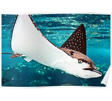 Spotted eagle ray Poster