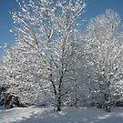 We Got Snow! by Vivian Eagleson