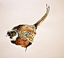 Pheasant Watercolour Design  by isabellahay7