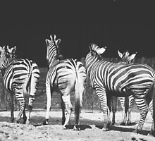 Zebras From Behind by PatiDesigns