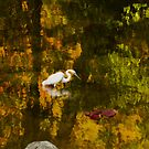 Autumn Impressions by Diane Schuster