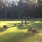 Iconic Kangaroo under Hills Hoyst !!! by LESLEY B