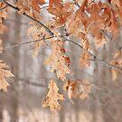 Combo of Seasons by AbigailJoy