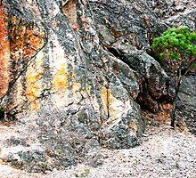 Mount Roland  Tasmania by Imi Koetz