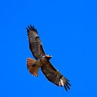 Red Tail, Blue Sky - icases by KarDanCreations