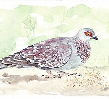 African Rock Pigeon by Maree  Clarkson
