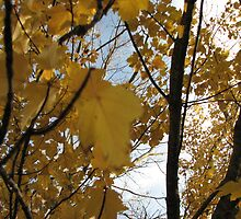Yellow Autumn Leaves (Maple) by fandoms-fineart