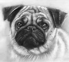 Pug Dog Drawing by OlechkaDesign